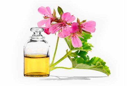 Ефірна олія герані властивості і застосування