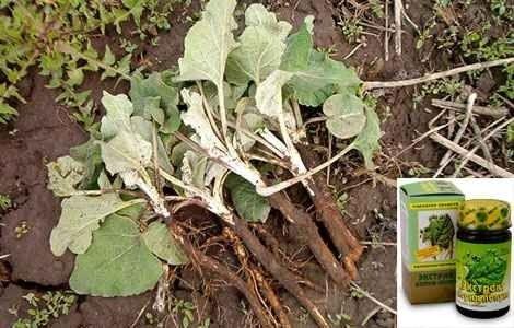 Екстракт кореня лопуха інструкція