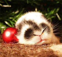 Як правильно зустрічати 2011 кролика: макіяж, одяг, взуття, поради астролога. Прикраса будинку (квартири) до нового року 2011