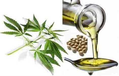 Конопляна олія властивості і застосування