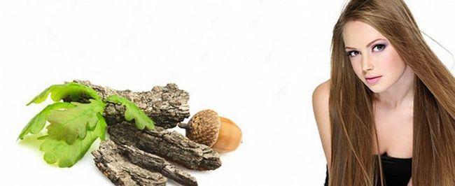 Кора дуба для лікування волосся і фарбування