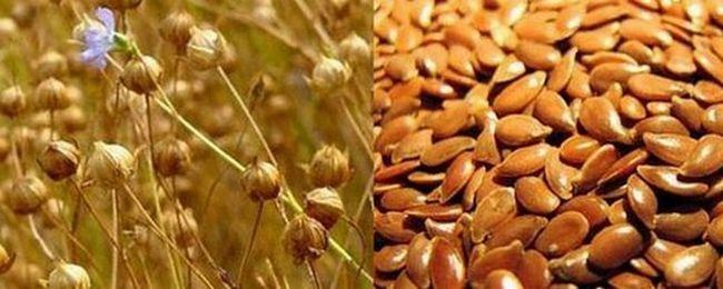 Застосування лляного насіння в оздоровчих цілях. Що лікує