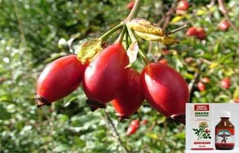 Застосування масла насіння шипшини в домашніх умовах